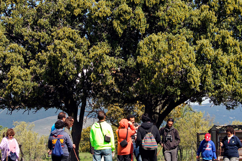 Visiter madrid et le parc national monte holiday ecoturismo for Parc a visiter
