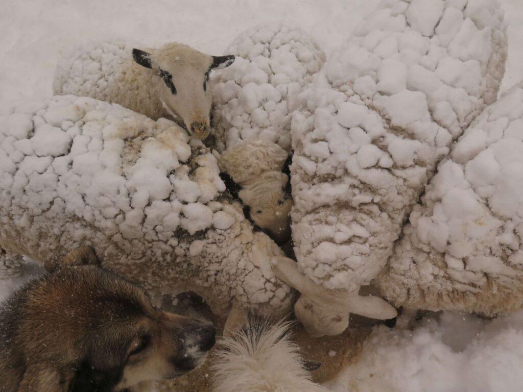 Invierno en la granja para niños Monte Holiday Ecoturismo